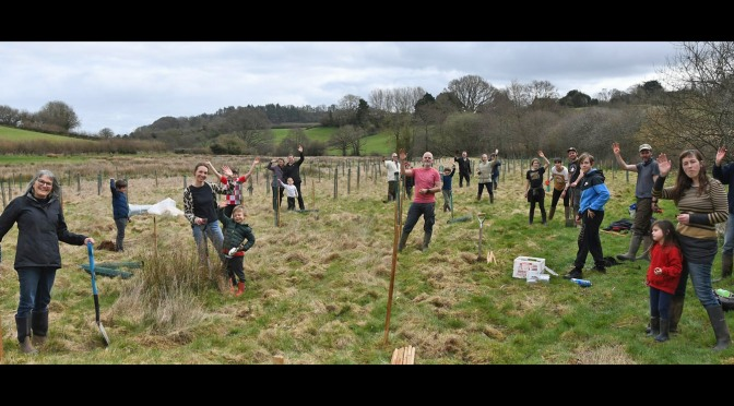 Lots of Wivey tree planting